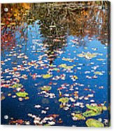 Autumn Reflections Acrylic Print by Bill Wakeley