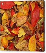 Autumn Remains Acrylic Print