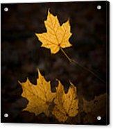 Autumn Remnant Acrylic Print