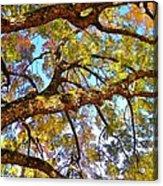 Autumn Revealed Acrylic Print