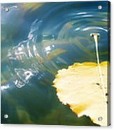 Autumn Ripples Acrylic Print