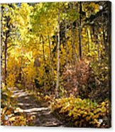 Autumn Road - Tipton Canyon - Casper Mountain - Casper Wyoming Acrylic Print