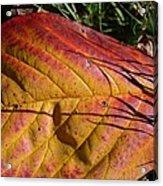 Autumn Saga Acrylic Print