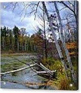 Autumn Scene Of Along The Shore Of The Platte River In Michigan Acrylic Print