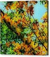 Autumn Scenery Acrylic Print