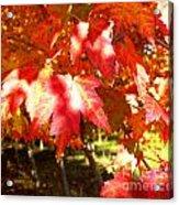 Autumn Shadows Acrylic Print
