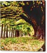 Autumn Shelter Acrylic Print