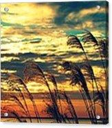Autumn Skies Over The Ocean Acrylic Print