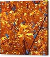 Autumn Splendor 15 Acrylic Print