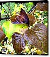 Autumn Splendor 4 Acrylic Print