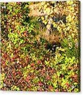 Autumn Splendor 7 Acrylic Print
