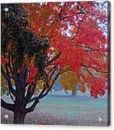 Autumn Splendor Acrylic Print by Lisa Phillips