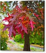 Autumn Splendor Acrylic Print by Mamie Thornbrue