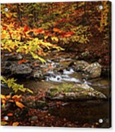 Autumn Stream Square Acrylic Print