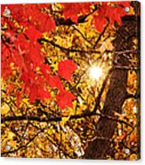 Autumn Sunrise Painterly Acrylic Print