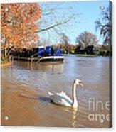 Autumn Swan Acrylic Print