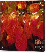 Autumn Acrylic Print by Sylvia  Niklasson