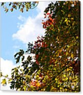 Autumn To Perfection Acrylic Print