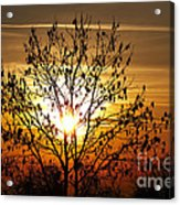 Autumn Tree In The Sunset Acrylic Print by Michal Boubin