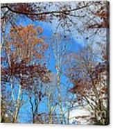 Autumn Trees And Heaven Acrylic Print