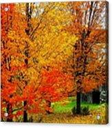 Autumn Trees By Barn Acrylic Print