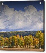 Autumn Trees In A Row Acrylic Print