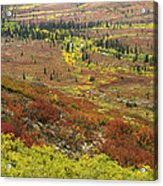 Autumn Tundra With Boreal Forest Acrylic Print