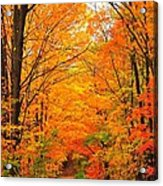 Autumn Tunnel Of Trees Acrylic Print