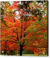 Autumn Umbrella Of Color Acrylic Print