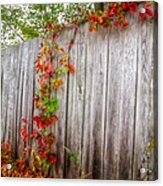 Autumn Vines Acrylic Print