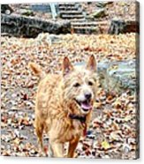 Autumn Walk Acrylic Print by Bob Jackson