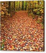 Autumn Walk In Ohio Acrylic Print