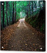 Autumn Walks Acrylic Print