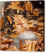 Autumn Water Eddy Acrylic Print