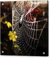 Autumn Web Acrylic Print by John Monteath