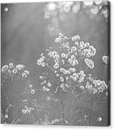 Autumn Weeds Acrylic Print