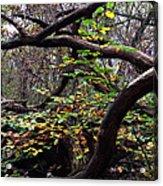Autumn Wild Nature Denmark Acrylic Print