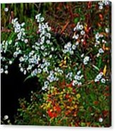 Autumn Wildflowers Acrylic Print