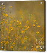 Autumn Wildflowers  Acrylic Print