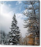 Autumn Winter Colors 2 Acrylic Print by Roger Snyder