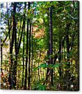 Autumn Wood Acrylic Print