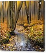 Autumn Woodland Acrylic Print by Ian Hufton