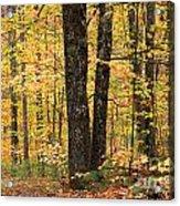 Autumn Woods 1 Acrylic Print