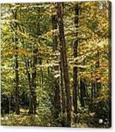 Autumn Woods II Acrylic Print