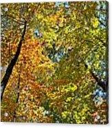 Autumn Woods Sky View Acrylic Print