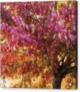 Autumn Xvii Acrylic Print