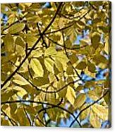Autumn Yellow Acrylic Print