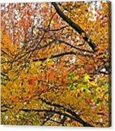 Autumnal Bliss Acrylic Print