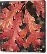 Autumnal Face Acrylic Print