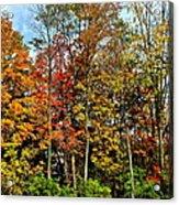 Autumnal Foliage Acrylic Print